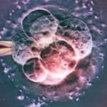 El limbo de los embriones congelados