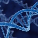 Descubren el reloj biológico del ADN