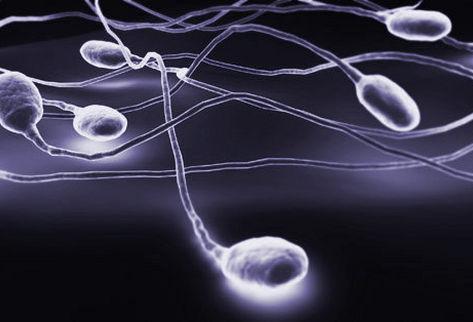 Estrés oxidativo y función espermática