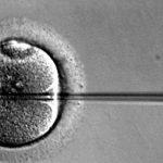 Identificada la proteína clave para mejorar la fertilidad en mujeres mayores de 40 años