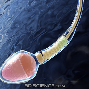 Proteína de esperma sintético
