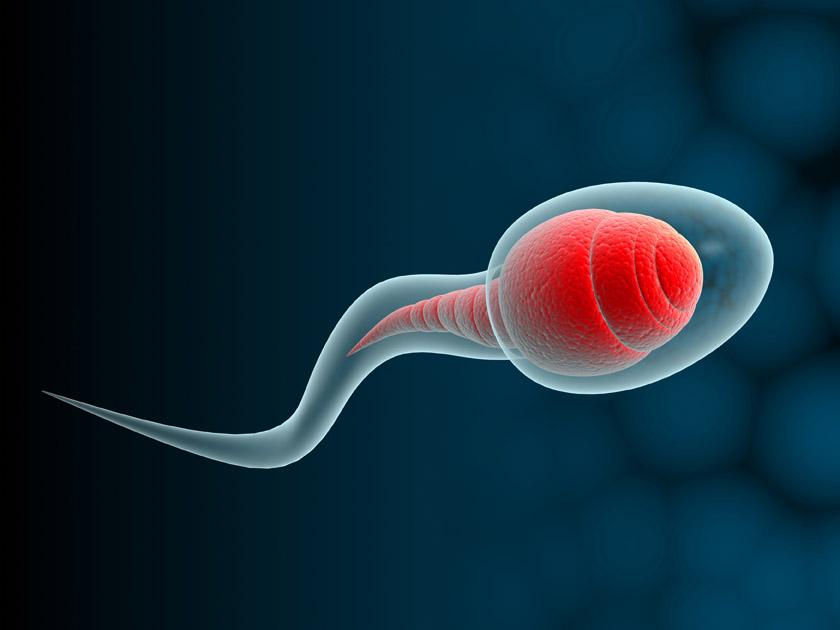 Escuela de Medicina descubre la causa del espermatozoide 'sin cabeza' en la infertilidad masculina