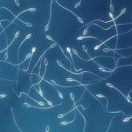 Relación entre las distintas subpoblaciones celulares, la enzima superóxido dismutasa y la calidad seminal