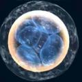 Nacimientos In vitro siguen aumentando en Estados Unidos