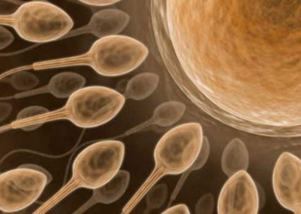 La épica aventura de un espermatozoide