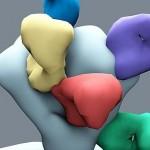 Identifican un nuevo 'talón de Aquiles' del virus del sida