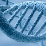 Ciliopatías ofrecen información sobre enfermedades y síndromes en humanos