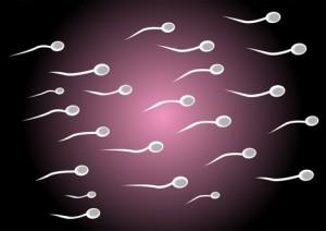 Descenso de la fertilidad humana por culpa de ciertas sustancias contaminantes m xico f rtil - Alimentos fertilidad masculina ...