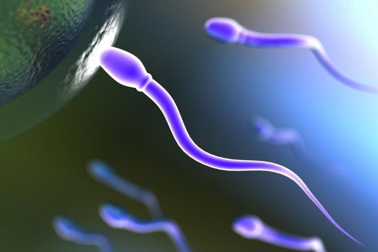 Cuántos espermatozoides se necesita para lograr un embarazo?