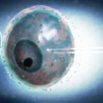 Embriones frescos vs. congelados en IVF: un debate sin resolverse