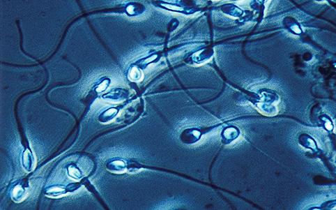 Óvulos y espermatozoides rudimentarios hechos de células madre