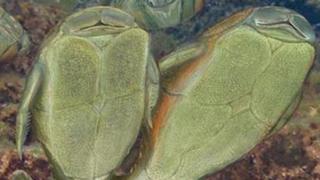 Descubren origen del sexo gracias a estudio de peces prehistóricos