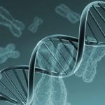 Investigadores descubren el trastorno genético único responsable de la insuficiencia ovárica en mujeres menores de 40 años