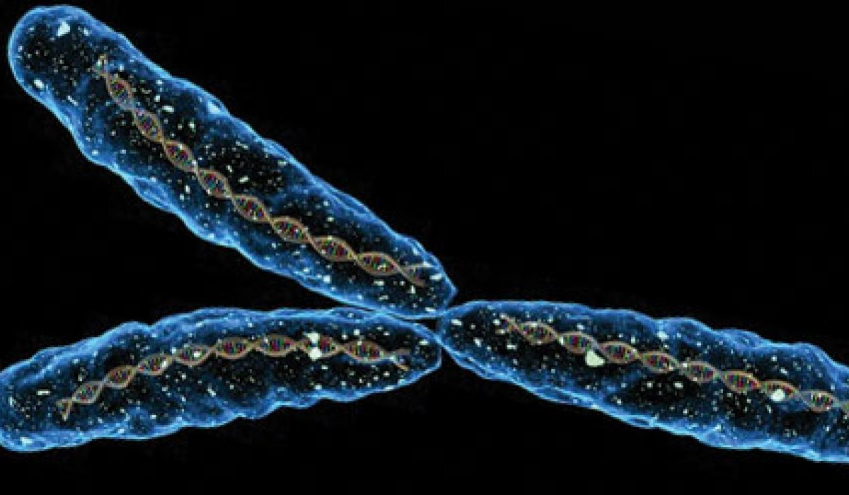 El cromosoma Y masculino podría no ser tan necesario para la reproducción