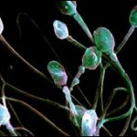 40% de casos de infertilidad son de origen masculino