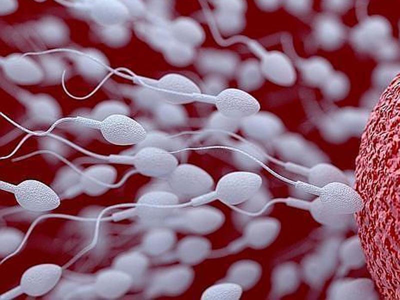 Ropa ajustada, teléfonos móviles y otros factores que afectan a la calidad del semen