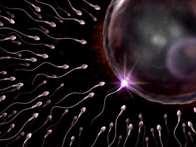 Evaluación de la motilidad espermática usando dos crioprotectores
