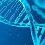Los índices de fragmentación del ADN espermático no se asocian con escasa blastulación o aumento de aneuploidía embrionaria en tratamientos de fertilización In Vitro