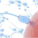 Baja gravedad en el espacio 'Podría dañar las células de esperma'