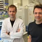 Identificado el director de orquesta que regula varios genes que provocan el cáncer