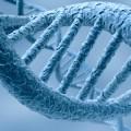 Ciliopatías ofrecen información sobre una variedad de enfermedades y síndromes en humanos