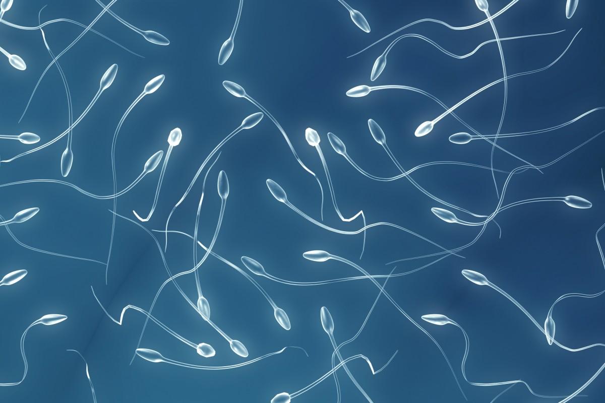 ¿Cómo los testículos hacen más esperma?