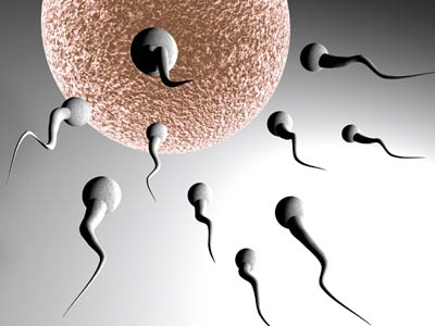 IPN: investiga vacuna contra la infertilidad